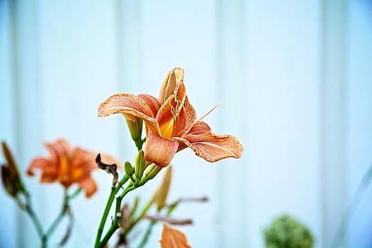 Morning Flower by Jaakko Saari