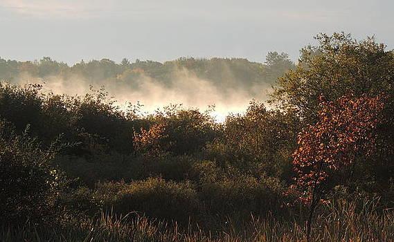 Morning Fog  by Amalia Jonas