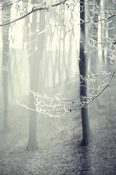 Morning Light by Valentina Bunic
