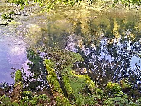 Moss and Reflections by Julie Grace
