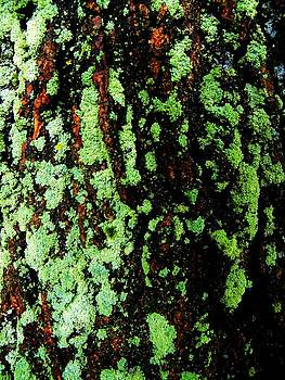 Mossy Bark 2 by Mark Malitz