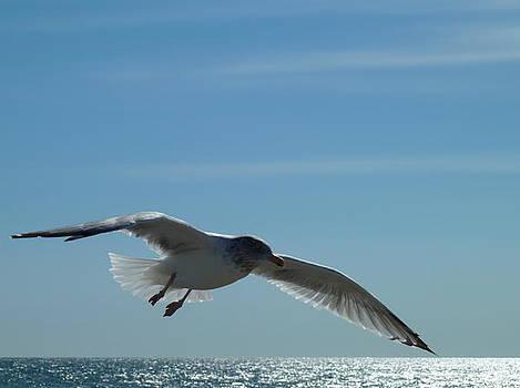 My Beautiful Wings by Merridy Jeffery