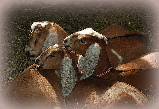 Napping in the sunrays by June Lambertson