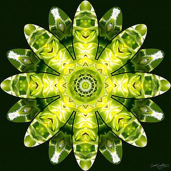 Nature's Mandala 12 by Derek Gedney