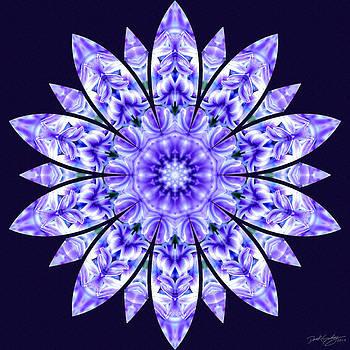 Nature's Mandala 15 by Derek Gedney
