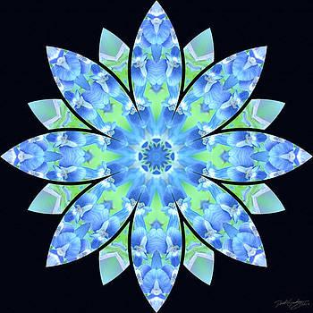 Nature's Mandala 17 by Derek Gedney
