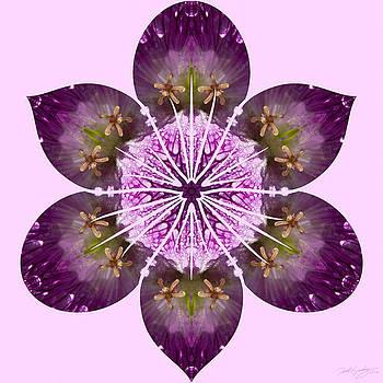 Nature's Mandala 20 by Derek Gedney