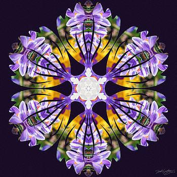 Nature's Mandala 23 by Derek Gedney