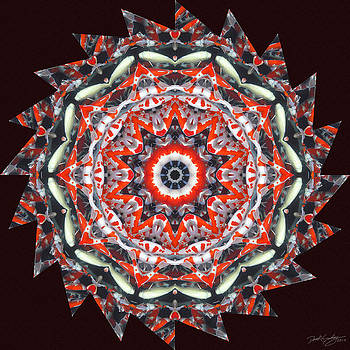Nature's Mandala 31 by Derek Gedney