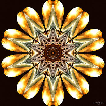 Nature's Mandala 53 by Derek Gedney