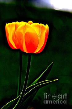Neon Tulip by Jay Nodianos