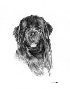 Newfoundland Water Dog by Lou Ortiz