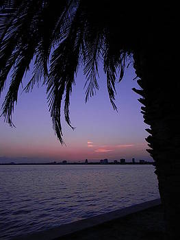 Night time palm  by Joanne Askew