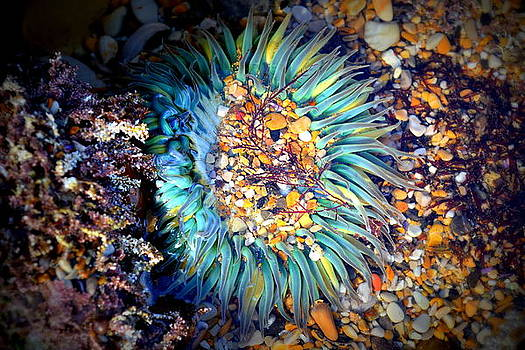 Ocean Flower by Mikki Cromer