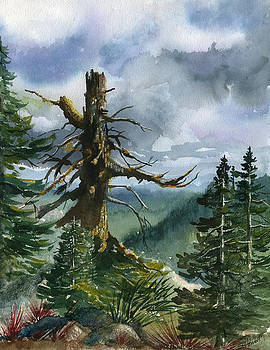 Old Soul of the Forest by Sandi Howell