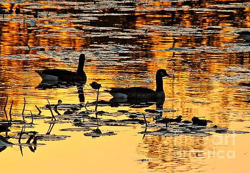 On Golden Pond by Jay Nodianos