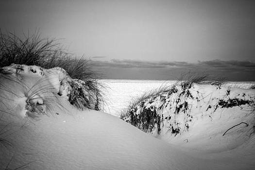 On Top of a Dune in Winter by Steve Johnson