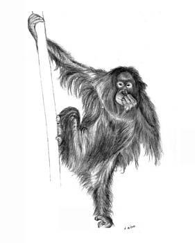 Orangutan by Lou Ortiz