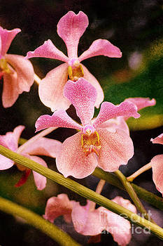 Orchid Number 17 by Floyd Menezes