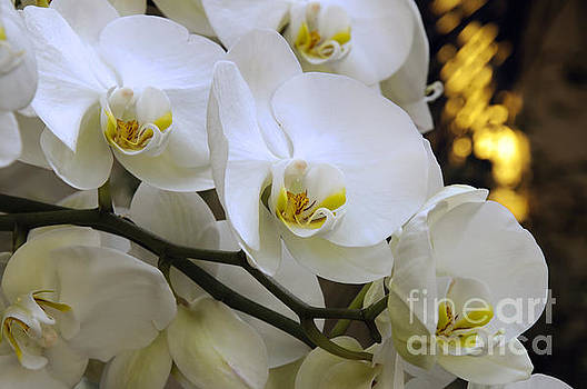 Orchid Romance by Andee Design