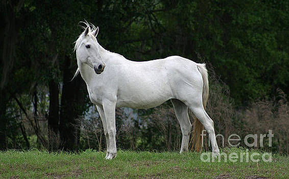 Our mare Silverbell by Lynn Jackson