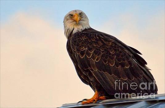 Owlish I by Gail Bridger