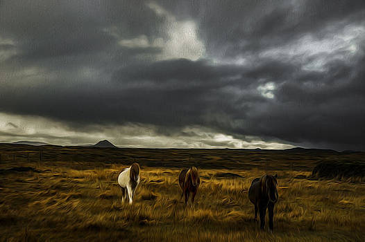 Painted horses in Icelandic nature by Petur Mar Gunnarsson
