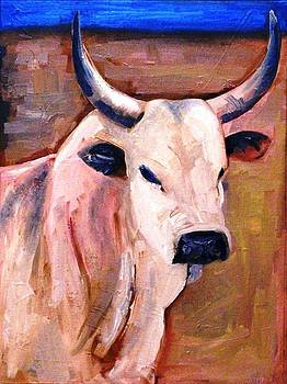 Pale Pink Nguni by Paul Bokvel Smit