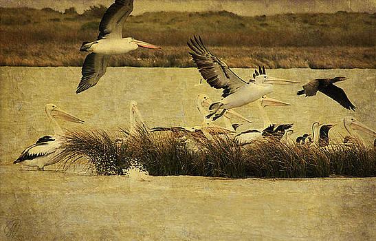 Pelican Days by Margaret Hormann Bfa