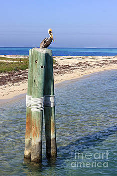 Pelican Lookout by Alison Tomich