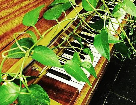 Piano Vine by Edwin Newman