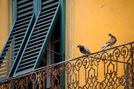 Pigeons in Pisa by Sharon Sefton