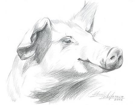 Piggy  by Alena Nikifarava