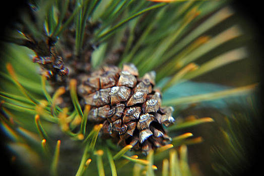 Pine Cone by Donna Desrosiers