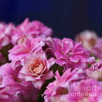 Pink and Blue II by Pamela Gail Torres