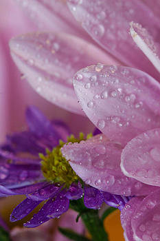 Pink And Purple by Christy Patino
