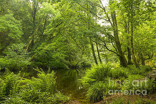 Plymbridge Woods by Donald Davis