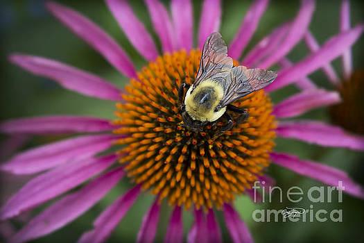 Pollen Patrol by Cris Hayes