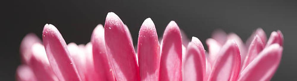 Precious Petals by Leah Kimper
