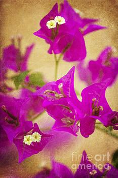 Primavera by Pamela Gail Torres
