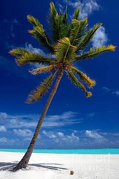 Pristine Tropical Beach  by Karen Lee Ensley
