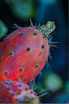 Protected Fruit by Marta Cavazos-Hernandez