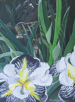 Purple Bearded Iris by Michelle Young