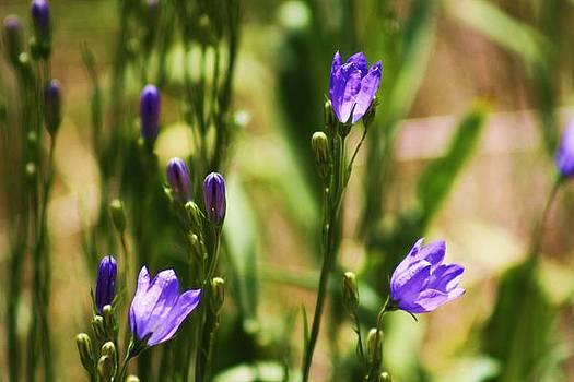 Purple Bells by Daniel Rooney