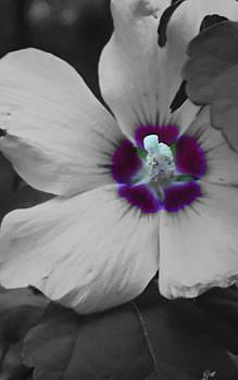 Purple Heart by Melissa Jones