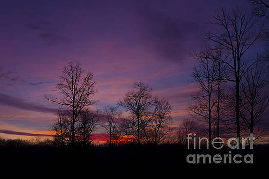 Purple Morning by Debra K Roberts