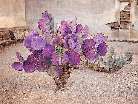 Purple Prickly Pear Cactus In The Southern US by Kriss Russell