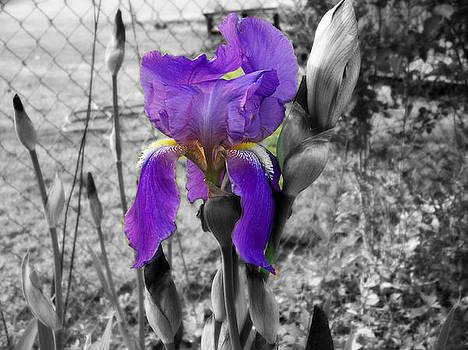 Purple Spring by Regina McLeroy