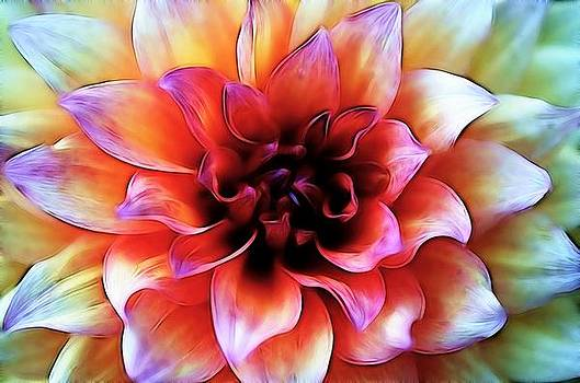 Rainbow Flower by Steve Barge