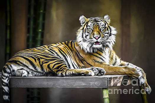 Ranu the Sumatran Tiger by Shannon Rogers